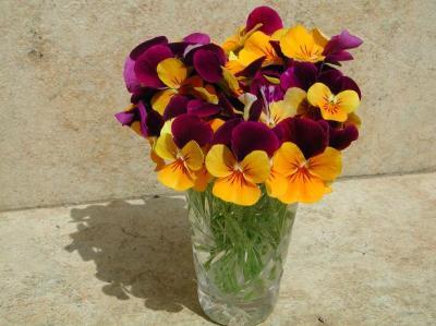 紫&オレンジビオラ