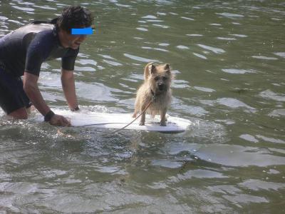 ボディボード犬 なっちゃん