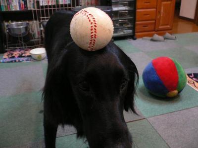 ボール遊び?