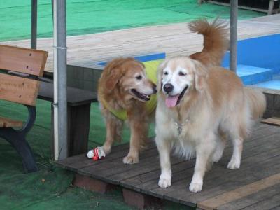 7歳GRコンビのジュンと蘭ちゃん
