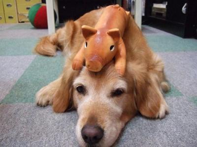 ジュンと豚
