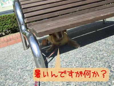 背のばし椅子の下