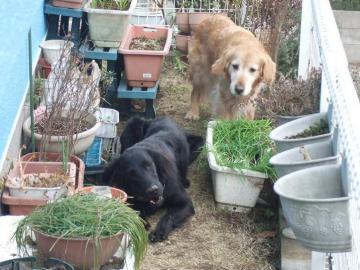 お庭大好き♪