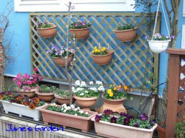 家の前の花たち