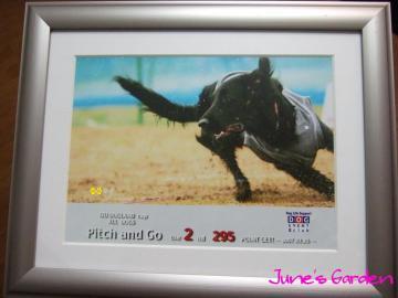 25日伊豆ドッグランド杯Pitch&Go2位