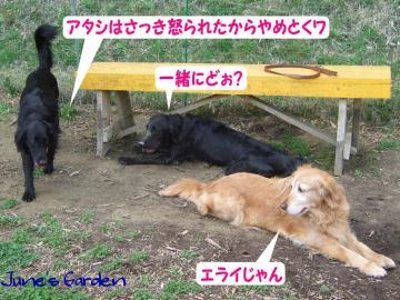 ジュンマイと桜子ちゃん