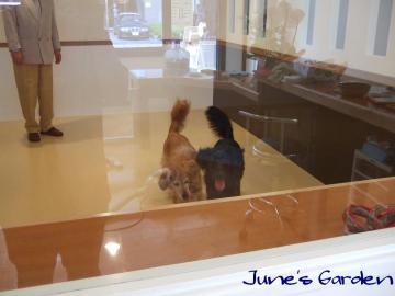 小型犬用スペース側からみた大型犬用スペース