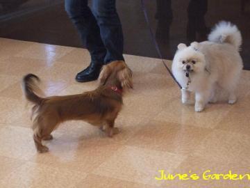 小型犬のお友だち