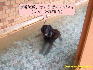 小型犬用プール
