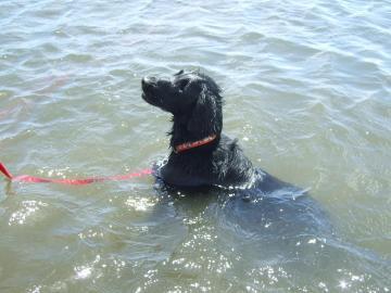 水中の足の着く場所でオスワリさせて休憩