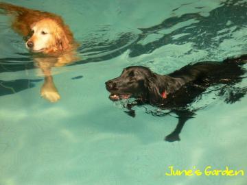 とりあえず泳ぎました