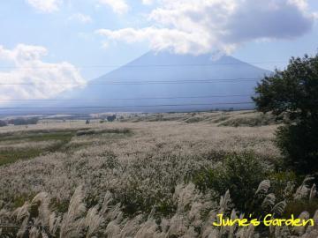 富士山裾野のススキ野