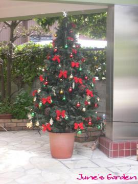 動物病院のクリスマスツリー