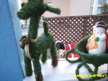 クリスマス撮影会5
