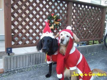 クリスマス撮影会1