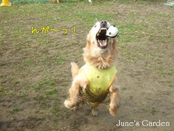 ジュンもボール遊び