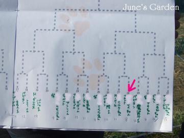 犬種別ハンデ戦トーナメント表 マイの山