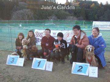 犬種別ハンデ戦トーナメント入賞メンバー