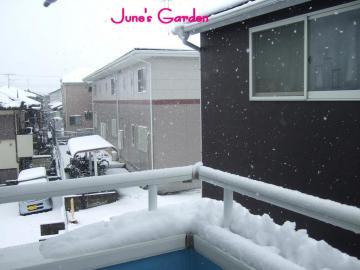 雪だぁ~!