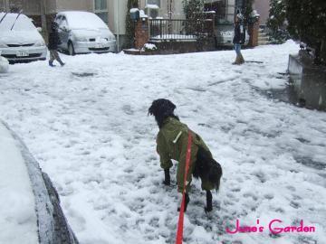 アタシも雪合戦する!