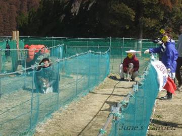 陸君vsグレースちゃん