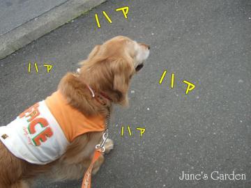 08-04-02_14.jpg