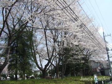 08-04-03_26.jpg