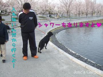 さくら広場の池