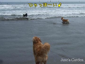 08-05-03_16.jpg