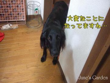 08-05-09_26.jpg