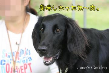 20080810_99_76.jpg