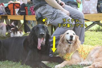 20080907_99_197.jpg