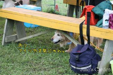 20080907_99_51.jpg