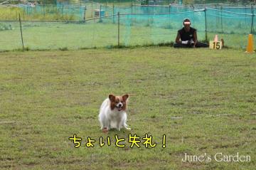 20080907_99_99.jpg