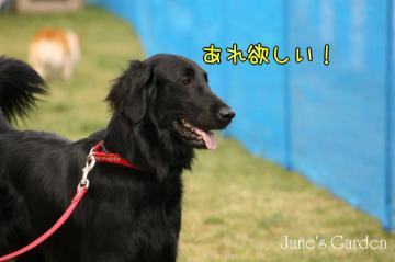 20080928_99_20.jpg
