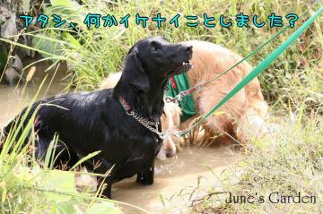 20081005_99_215.jpg