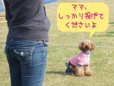ペシェちゃん頑張れ~!