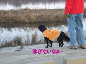 坂東太郎で泳ぐか?