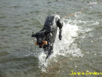水の中も走ります