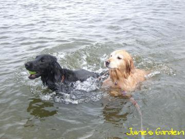仲良く泳いでます