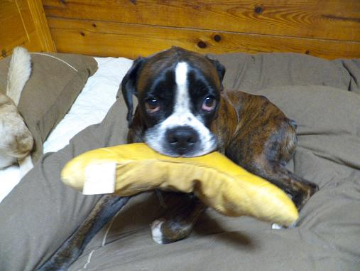 20111215うなぎ犬