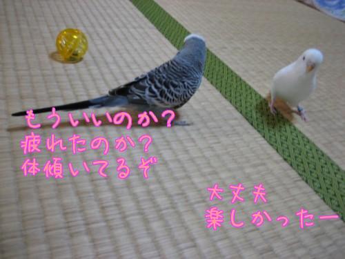 ゆきボール遊び④