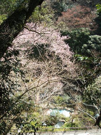 2007_0327izu0082-1.jpg