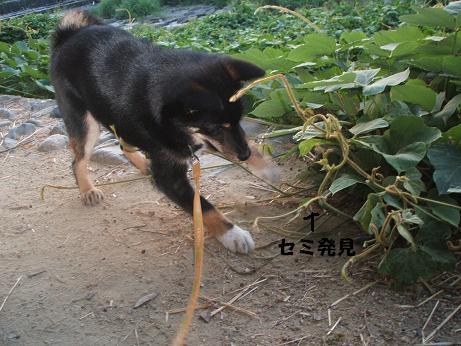 2008_0629画像0405