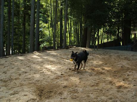 2008_0901画像0193-1