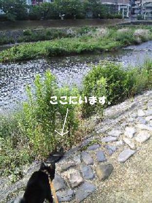 Image0911_20080704145432.jpg
