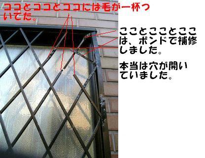 VFSH0011.jpg
