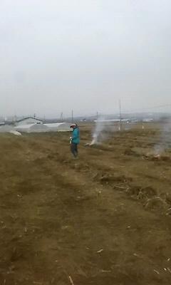 アスパラ畑
