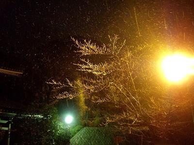 知恩院・雪20091231