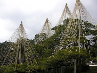 唐崎松20100220